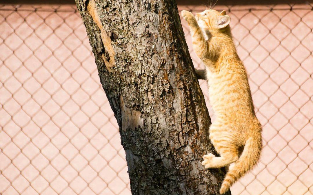Klettermöglichkeiten für deine Katze